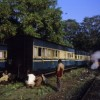 Mettupalayam, India, 2009
